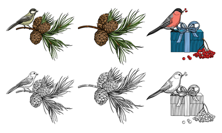 Bird, branch of cedar with cedar cone, gift, rowan berries. Bullfinch. Titmouse. Christmas vector illustration. The isolated image on a white background. Vintage style.