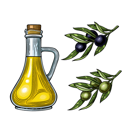 Glass jug with olive oil. Olives on a branch with leaves. Vector illustration. Vintage style. Templates for design shops, restaurants, markets.