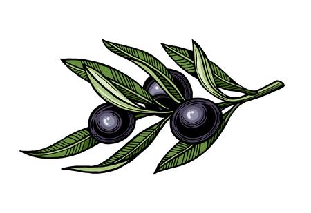 Olives on a branch with leaves. Vector illustration. Vintage style. Templates for design shops, restaurants, markets. 版權商用圖片 - 116021429