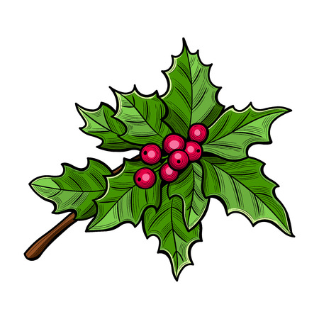 The poinsettia red flowers, The Flower of the Christmas, close up. Vector illustration. The isolated image on a white background. Illustration