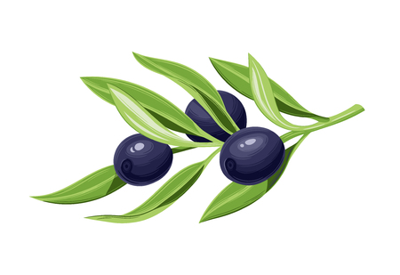 Olives on a branch with leaves. Vector illustration. Vintage style. Templates for design shops, restaurants, markets. Archivio Fotografico - 116021435