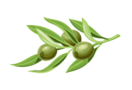 Olives on a branch with leaves. Vector illustration. Vintage style. Templates for design shops, restaurants, markets. Archivio Fotografico - 116021439