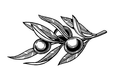 Olives on a branch with leaves. Vector illustration. Vintage style. Templates for design shops, restaurants, markets.