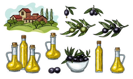 Olives on a branch with leaves. Glass jugs and a bottle of olive oil. Rural landscape with Villa or farmhouse, field, trees and cypress trees. Vintage style. Isolated on white background. Illustration