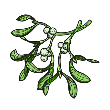 Branch of mistletoe with berries. A bouquet of Christmas. Vector illustration. The isolated image on a white background. Ilustração