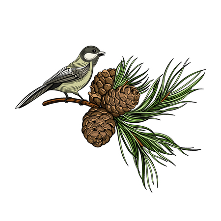 Bird, fir branch. Christmas vector illustration. The isolated image on a white background. Vintage style.
