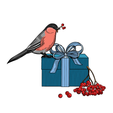 Bird, gift, rowan berries. Bullfinch. Christmas vector illustration. Isolated image on white background. Vintage style.