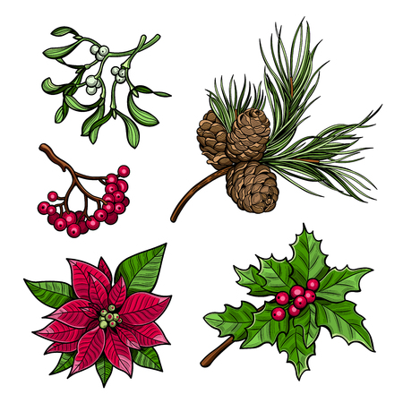 Holly branch with berries, spruce branch with cones, branch of mistletoe with berries, the poinsettia red flowers, rowan branch with berries. Merry Christmas. Vector illustration. Isolated images on white background.