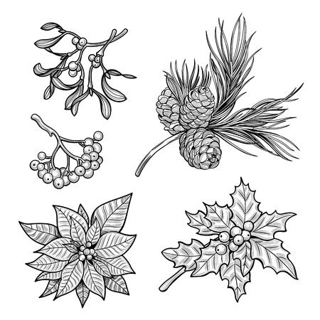 Rama de acebo con bayas, rama de abeto con conos, rama de muérdago con bayas, flores rojas de poinsettia, rama de serbal con bayas. Feliz Navidad. Ilustración de vector. Imágenes aisladas sobre fondo blanco. Ilustración de vector