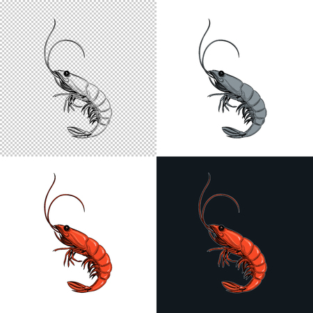 Shrimp. Seafood. Vector illustration. Isolated image on white background. Vintage style. Çizim