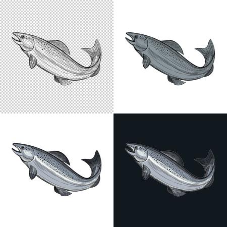 Fish. Seafood. Vector illustration. Isolated image on white background. Vintage style. Ilustração