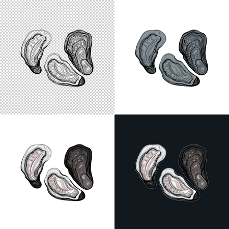 Oyster. Seafood. Vector illustration. Isolated image on white background. Vintage style. Archivio Fotografico - 116021647