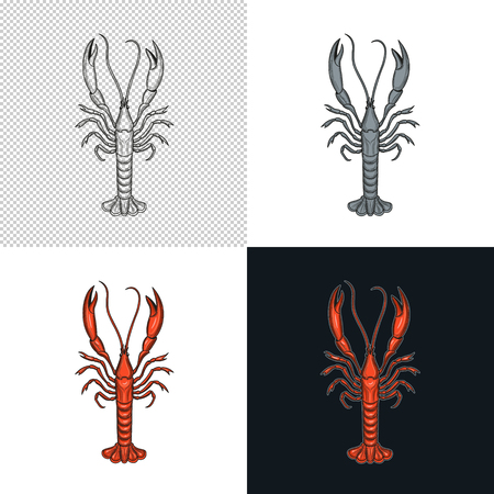 Langoustine. Crustaceans. Seafood. Vector illustration. Isolated image on white background. Vintage style. Çizim