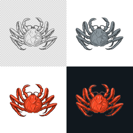 Crab. Seafood. Vector illustration. Isolated image on white background. Vintage style. 版權商用圖片 - 116021658