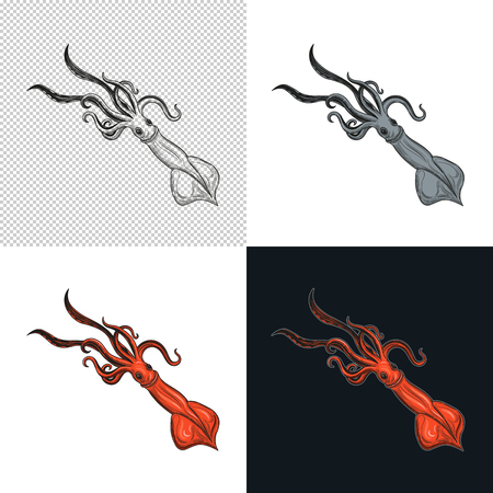 Squid. Seafood. Vector illustration. Isolated image on white background. Vintage style.
