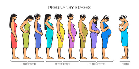 multiple birth: Stages of pregnancy.