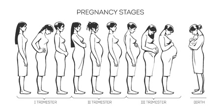 multiple birth: Stages of pregnancy. image of stages of pregnancy. Pregnant woman. Motherhood. Trimester of pregnancy. Nine months of pregnancy. Image of different pregnant women. color illustrations