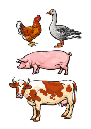 livestock: Farm animals, cow, pig, chicken, goose, poultry, livestock, color vector illustration, sketch style with a set of animals isolated on white background, realistic animal products for sale