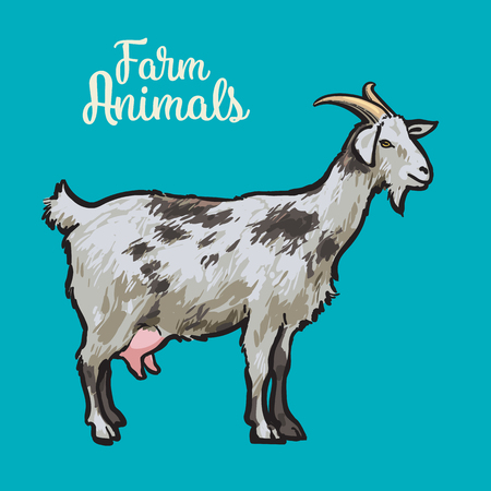 hoofed mammal: Farm pet goat sketch drawn by hand, cattle, milk and goat meat, goat meat, one farm horned animal on a blue background, vector illustration livestock - goats.