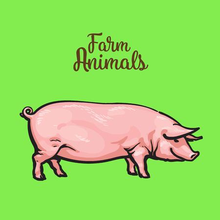 緑の背景、ファーム動物豚ピンク豚スケッチ手で描いたベクトル イラスト、1 つ豚画像肉の販売のための厚い満足豚、肉を食べて