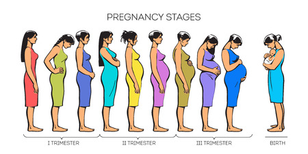 nine  months: Stages of pregnancy. image of stages of pregnancy. Pregnant woman. Motherhood. Trimester of pregnancy. Nine months of pregnancy. Image of different pregnant women. color illustrations