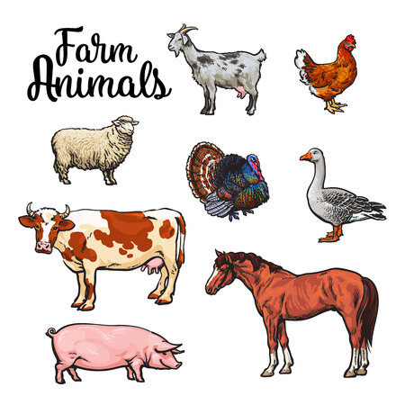 Los animales de granja, vaca, cerdo, pollo, ganso, aves de corral, animales de granja ilustración vectorial de color, del estilo del bosquejo con un conjunto de animales aislados, productos animales realistas para la venta, el caballo y la cabra pavo, ovejas,