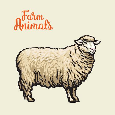 절연, 벡터 스케치 빛 배경에 손으로 그린 벡터 양, 농장 동물, cloven-hoofed 가축, 양, 두꺼운 모피와 양 아이콘