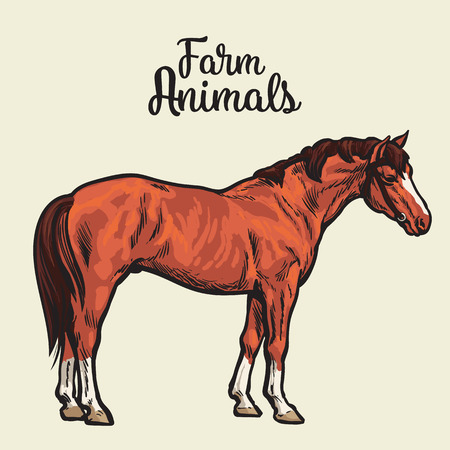 animal only: brown horse, vector illustration sketch of a hand-drawn with a single animal, the only brown horse, pet and animal fermeskoe young stallion, a horse farm, Chestnut horse isolated
