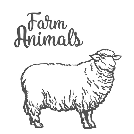 sheep farm: White sheep isolated, vector sketch drawn by hand on a light background sheep, farm animals, cloven-hoofed livestock, sheep, sheep icon with thick fur
