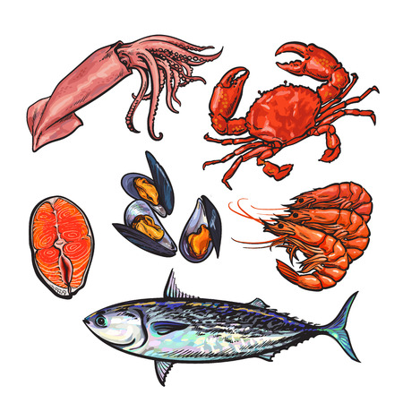color selection: Set of marine products from the sea food, vector set sketch hand-drawn elements, sea fish, crab, shrimp, fish steak, Colmar, mussels isolated on white background food color selection of fresh sea food