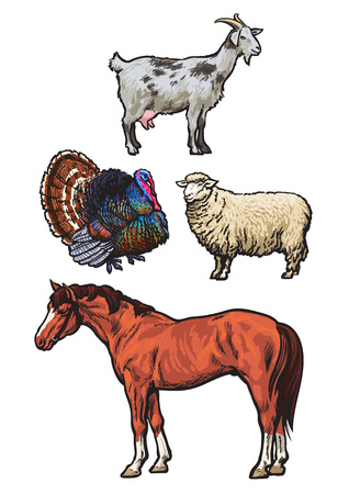 hoofed mammal: Farming, pets, set of cattle from a village, horse, goat, turkey, sheep, Set of colored animals isolated on a white background, animal sketch hand-drawn, realistic animal products for sale