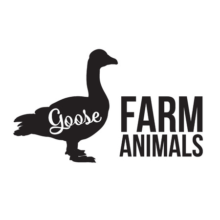 feathered: Grey goose, poultry, vector illustration sketch, farm feathered animal, one color and the beautiful goose on a yellow background