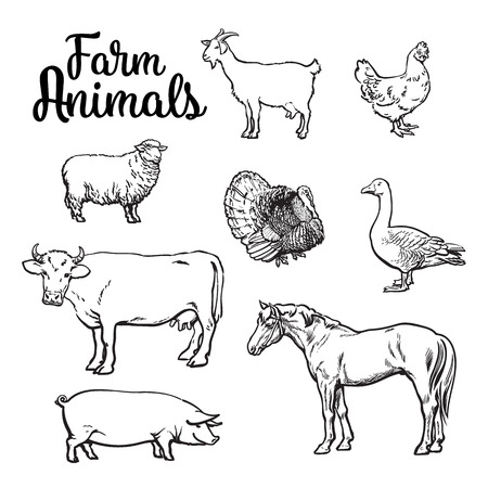livestock: Farm animals, cow, pig, chicken, goose, poultry, livestock, color illustration, sketch style with a set of animals isolated on white background, realistic animal products for sale