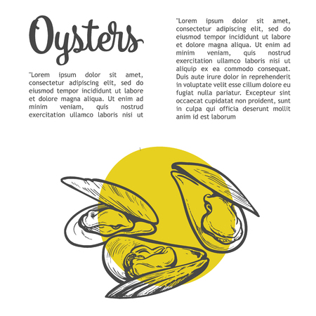 Oysters with lettering, vector sketch illustration of molluscs, half-open oysters on a white background with a yellow spot illustration for registration of sea food menu, fresh marine oyster