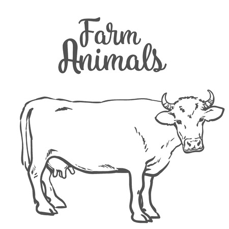 one animal: sketch of a cow on a white background one isolated hoofed animal, farm cattle. Domestic cattle, linear illustration of a horned cow and dairy, Stock Photo