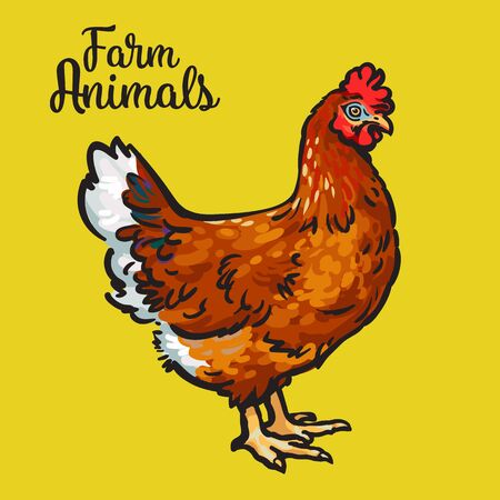 one animal: One red colored feathered chicken, sketch style hand-drawn, farm animal home winged bird chicken with white tail, one chicken on a yellow background