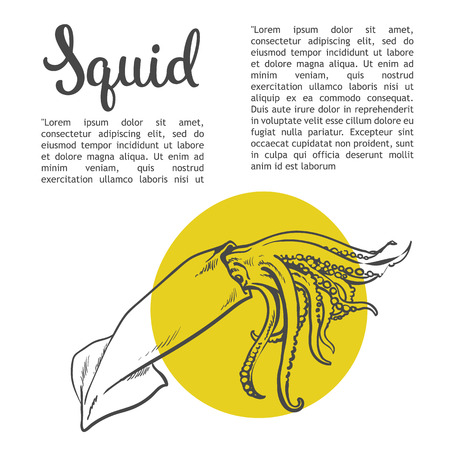 odors: Sketch squid, illustration drawn by hand on a white background, isolated squid, sea food concept for the menu, advertising, sales brochures with information inscription lettering Squid Stock Photo