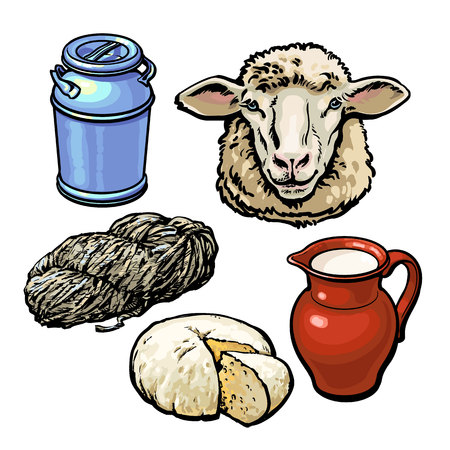sheep wool: head of sheep and production of products, vector sketch hand-drawn illustration isolated on white background, dairy products from sheep, wool, farm cheese and milk