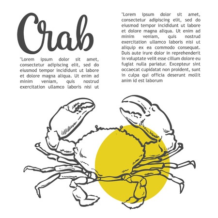 Sea crab, sketch illustration isolate on a white background Crab with yellow stain, sketch contour crab menu, design, sea food sales, marine animals arthropods