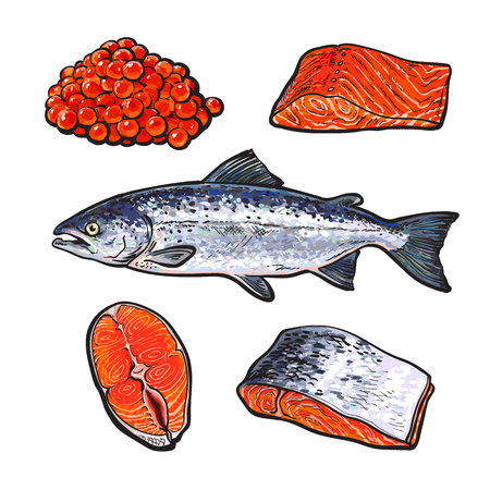 salmon fillet: sea fish salmon with caviar and fillets, vector sketch hand-drawn illustration isolated on white background, fresh sea fish salmon, seafood salmon, red caviar, a set of seafood with fresh food food Illustration