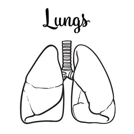 clean lungs: Sketch the lungs, vector sketch hand-drawn illustration isolated on white background, realistic sketch human red beautiful healthy lungs, the lungs of a healthy person clean