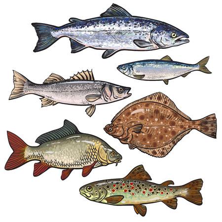 Sketch raccolta di pesci di stile del mare, illustrazione vettoriale isolato su sfondo bianco. Set di coloratissimi disegni realistici di pesce di mare commestibile. Tonno aringhe branzino pesce piatto pesce persico carpa