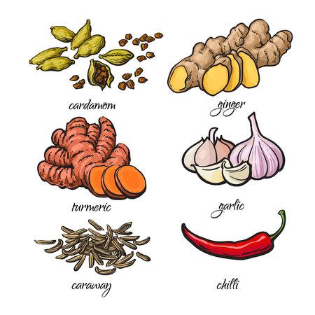 향신료 - 마늘, 생강, 심 황, 카 다 몬, 칠리, 캐 러 웨이, 흰색 배경에 고립 된 스케치 스타일 벡터 일러스트 레이 션의 집합입니다. 아시아와 인도 요리