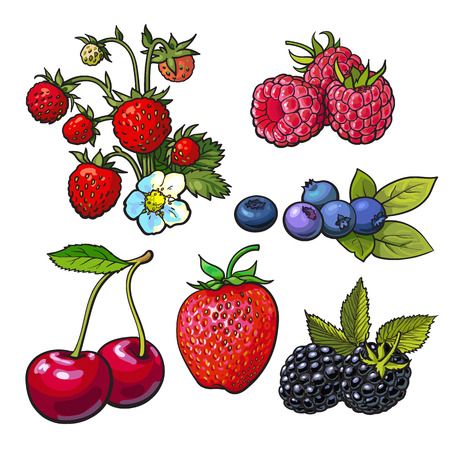 Collection of forest berries, vector illustration isolated on white background. Strawberry blueberry cherry raspberry. Set of fresh ripe berries, smoothie ingredients