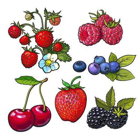 Sammlung von Waldbeeren, Vektor-Illustration isoliert auf weißem Hintergrund. Erdbeere Heidelbeere Kirsche Himbeere. Set von frischen reifen Beeren, Smoothie Zutaten