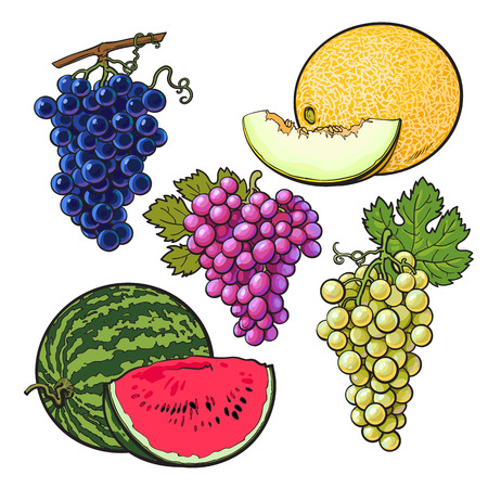 red grape: Collection of red, green and purple grapes, melon and watermelon, vector illustration isolated on white background. Set of fresh ripe grapes, whole and sliced melon watermelon, juicy summer fruits Illustration