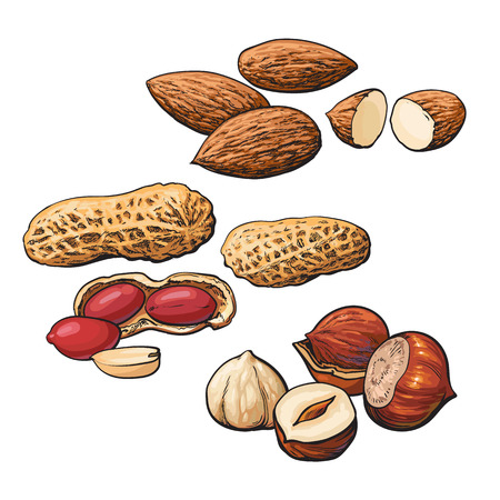 heaps: Collection of almond, hazelnut and peanut heaps vector illustration isolated on white background. Set of fresh and ripe nuts in shell and open