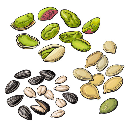 pumpkin seeds: Collection of pistachio, sunflower and pumpkin seeds, vector illustration isolated on white background. Set of fresh and ripe nuts in shell and open