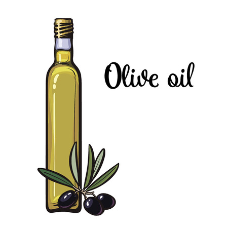 mediterranean diet: olive oil bottle with black olives isolated sketch style illustration on white background. beautiful realistic traditional oil bottle