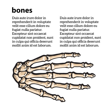 hand colored: bones of the human hand, illustration sketch isolated on white background. anatomical image of bone structure of human hand. Colored bone human finger, brochure on bone rengene